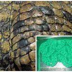Кожа крокодила крючком