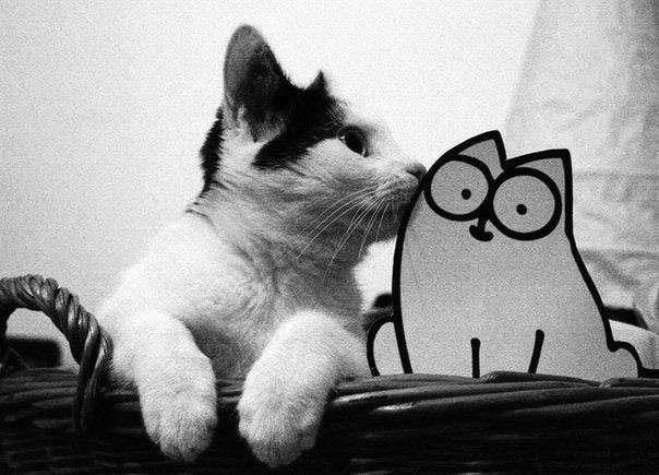 кот из мотивов (1)