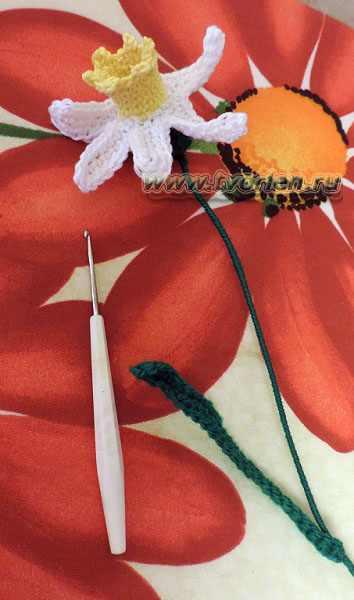 цветок нарцисса крючком(6)