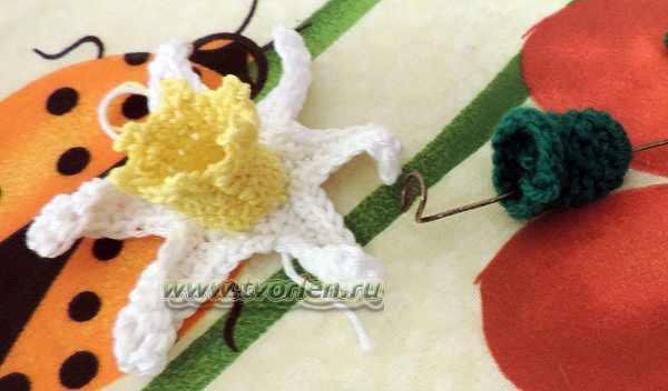 цветок нарцисса крючком(4)