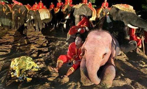 о розовых слонах (3)