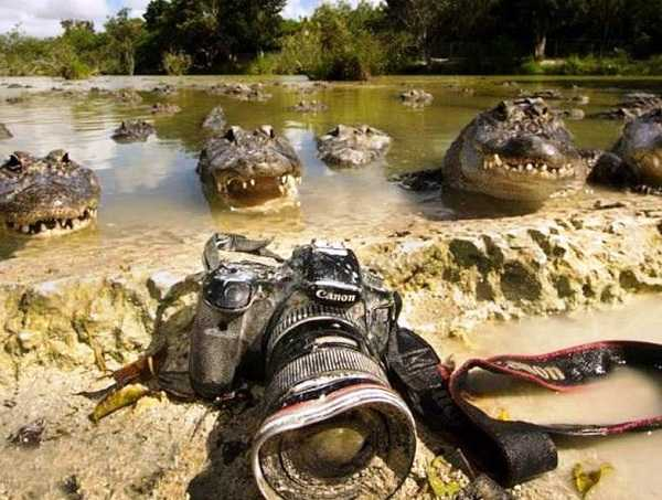 трудно быть фоторепортёром