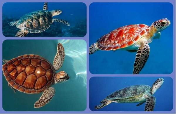 морские черепахи коллаж