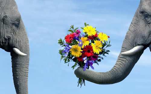 о розовых слонах (2)