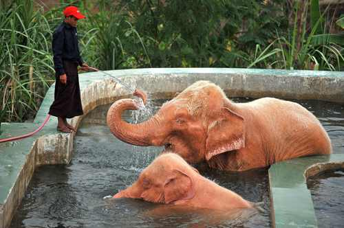 о розовых слонах (4)