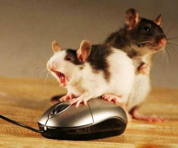 пара кликов мышью